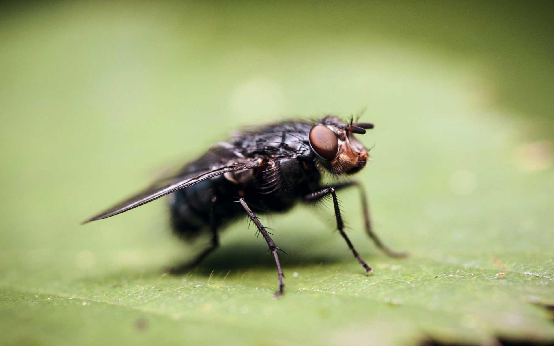 Haut & Insektenabwehr